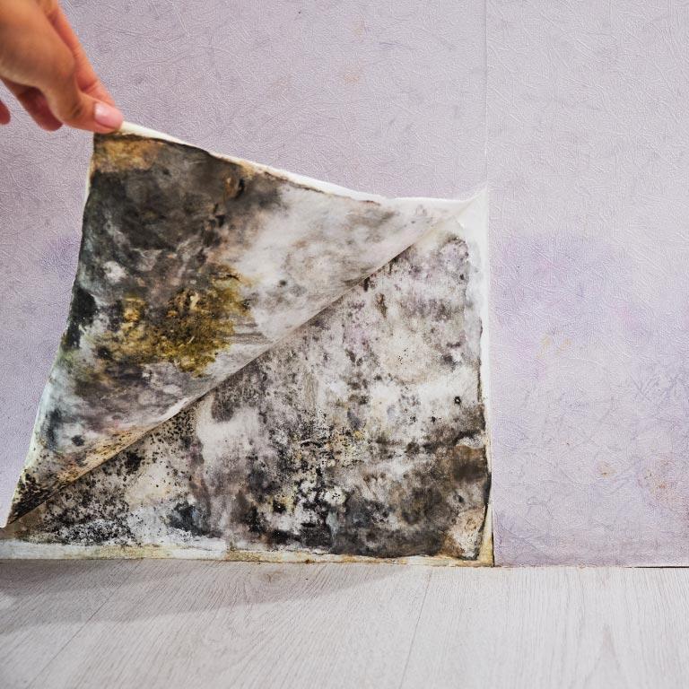 Mould Remediation - Klean-Rite, Grande Prairie